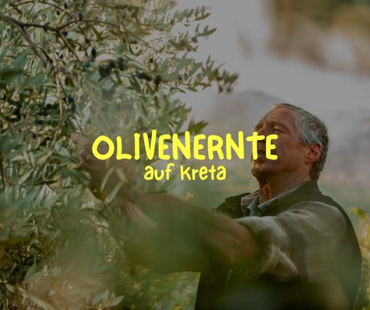 Alles über die Olivenernte auf Kreta